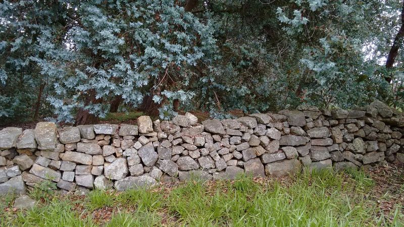 Gray wall Day Outdoors No People Nature Abundance Deforestation Large Group Of Objects Green Color Tree Grass Close-up Stone Wall No Filter, No Edit, Just Photography Stones Stone Material Nature_collection Gray Stones Wall Of Stone Eyeem Photography Rural Scenes Non-urban Scene