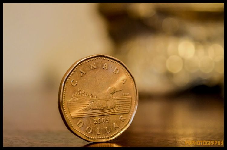 Money Dollar Loonies Cash Canadian Loon Taking Photos Check This Out Nikon EyeEmBestPics