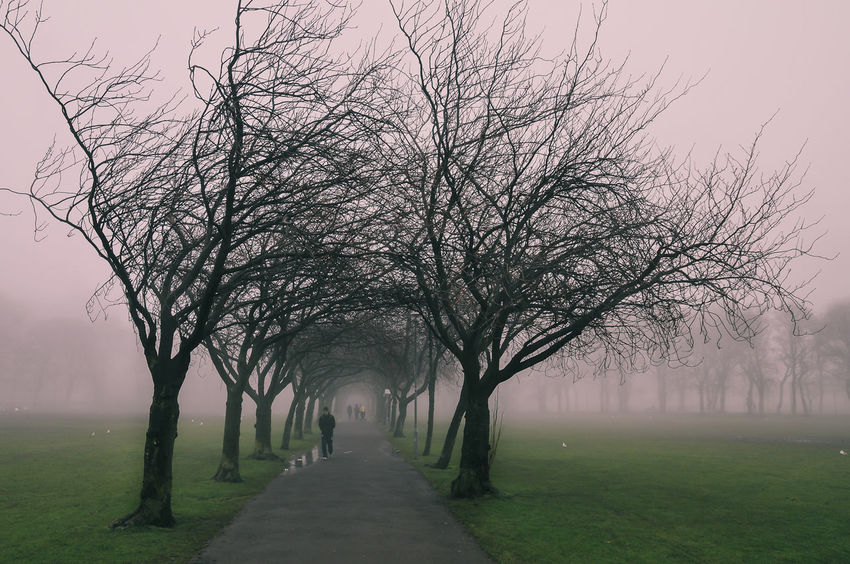A red foggy morning in a Park in Edinburgh, Scotland Day Early Bird Edinburgh Fog Great Britain Landscape Nature One Animal Out Outdoors Park Red Scotland Scotland Highlands Travel Travel Destinations Travel Lover Trees Fresh On Eyeem