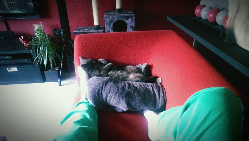 Cat Catsleep Cat Lovers Cat♡ Cats
