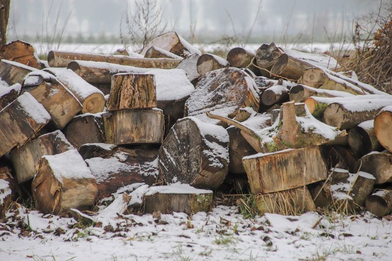 Wood in the snow Snow Stack Cold Temperature Winter Tree Nature Log Firewood Timber Forest Wood Abundance Field Wood - Material