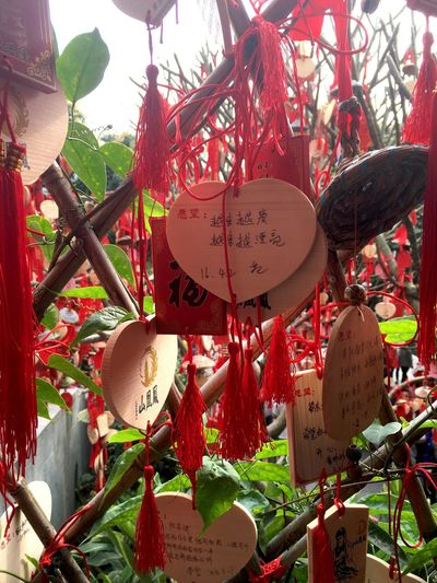 Chinese Wishing Tree at Phoenix Mountain in Baoan - Shenzhen, China Wish Tree China Wishes Wishing Tree Traditional Culture Buddhism Mountain Shenzhen Chinese BaoAn Temple Buddhist Temple Phoenix Mountain Traditional Chinese Tree Traditionally Chinese Chinese Culture Chinese Style Hanging