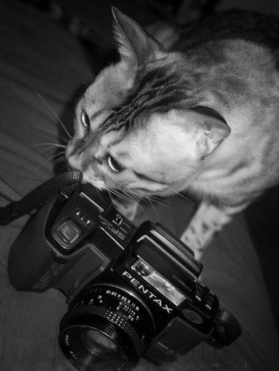 Cat Content!