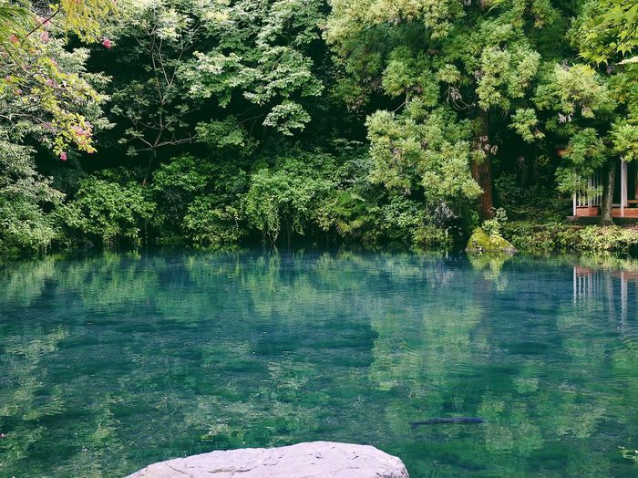 Water Nature Tranquility Growth Tree Outdoors Beauty In Nature Day No People Nikon Nikonphotography Nikon1j5 VSCO Vscocam Vscogood Japan Japan Photography Pond Zen Calm Relaxing