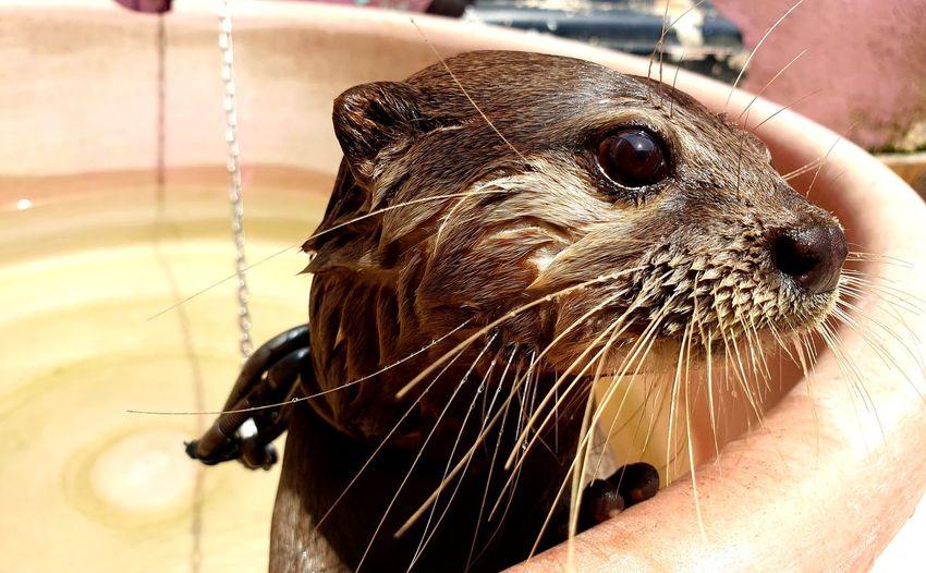 Otter Animals Water Portrait Pets Wet Close-up Aquatic Mammal Whisker