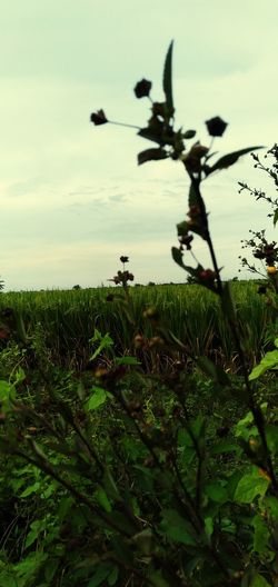View of plants growing on land against sky