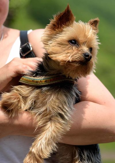 Midsection of woman holding puppy