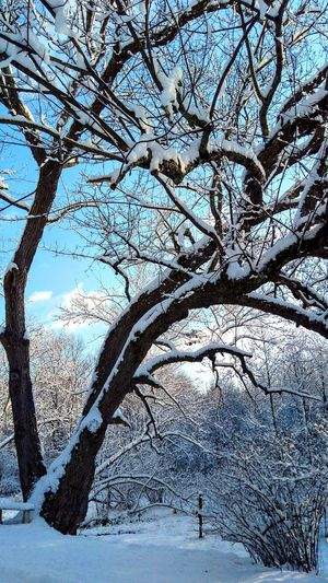 Beauty In Nature Tree Outdoors Day Winter Branch Snow Cold Temperature Backgrounds Close-up Sky