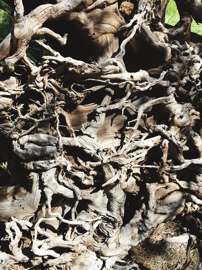 The deep and tangled roots of our family tree...