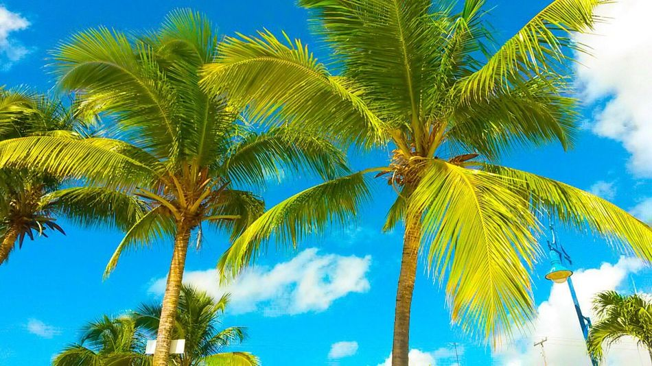 Palm Tree Blue Tropical Climate Sky Summer Tree No People Low Angle View Beauty In Nature Green Color Nature Day Beauty Outdoors Vacations Vacation Vacation Time Scenics Cloud - Sky