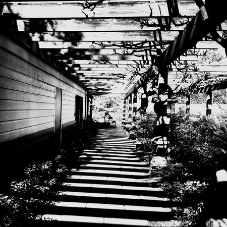 Light & Shade IPhoneography Seattle Blackandwhite Noir Nature Landscape Check This Out