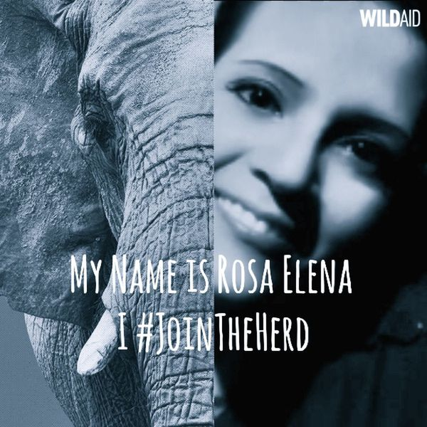 I join this cause! Indeed! ➡ https://yearoftheelephant.org/home animal ✔ A global movement to celebrate and protect elephants and rhinos. Committed to ending the trade in ivory and rhino horn Join The Herd Animal Love Animal Activist Activist  Activism Join The Cause Wildlife Wildlife & Nature Wild Animal Protect Elephants Protect Our Wild Life Protect Rhinos Protect Nature