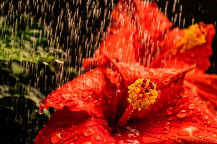 rain falling on