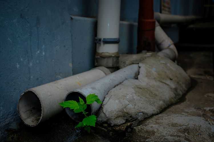sprouting near drainage pipes in back alley of the city Backalley Sprouting Sprouts Sprouts New Water Pipe Water Supply A Shelter Bud Close-up Day Drainage Drainage Pipe Drainage Pipes Drainpipe Freshness Green In A City Greenery Greenery In A City Leaf Nature No People Shelter Sheltering Survivor Water
