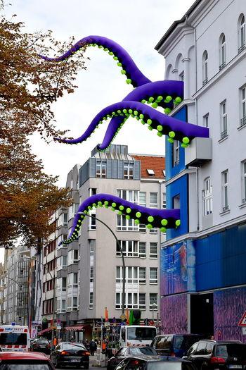 Krake Octopus