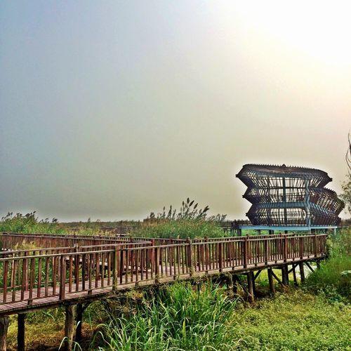 洪泽湖湿地
