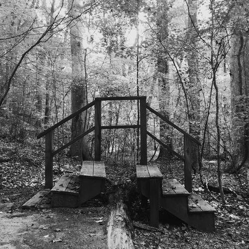Trail Steps Ncbotanicalgarden Chapelhill NC Hipstamatic
