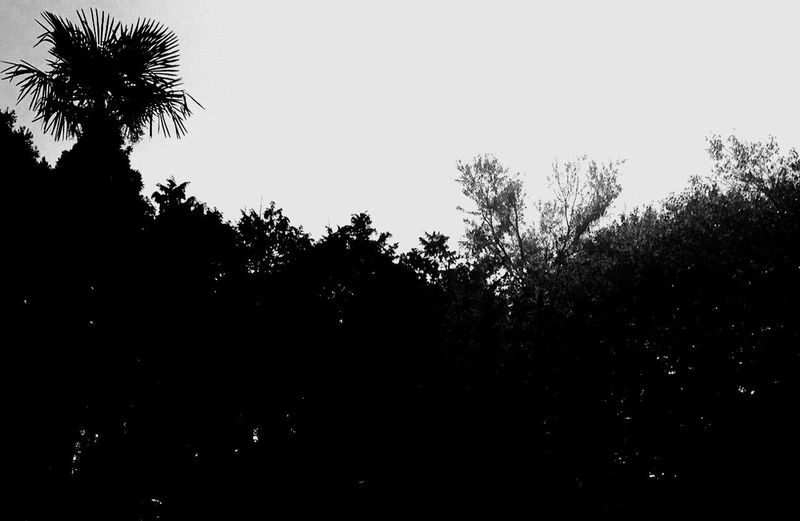 Coffee Smoking Light And Shadow Enjoying Nature Enjoying Life Hello World One Love Life's Journey  光 影 土 生命 心 音 縁 身体 童 脳 Everyday Joy EyeEm Best Shots - Black + White EyeEm Best Shots - Nature Stopping Time EyeEm Nature Lover Black And White Good Times Brooklynでチャレンジし続ける古い友人が、「10月に2週間ほど日本に帰る」と連絡してきた。最低1週間は我が家に転がり込むつもりらしい・・・。何をたくらんでやがんのか?今日は朝からワクワクが止まんねーぞこんちくしょーw