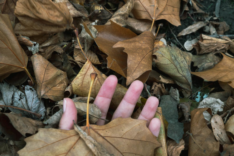 Autumn Leaf Dry Autumn Nature Leaves Human Hand Human Body Part Vulnerability  Fragility Outdoors Leaf Vein Unrecognizable Person Fall Maple Leaf Dried Finger Natural Condition Season  Lifestyles Life EyeEm Gallery EyeEm Selects