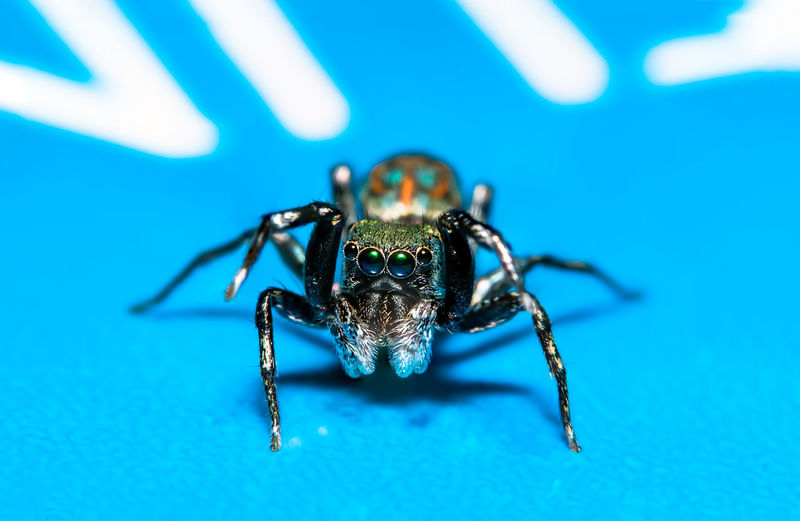 Macro Shot Of Spider On Blue Table