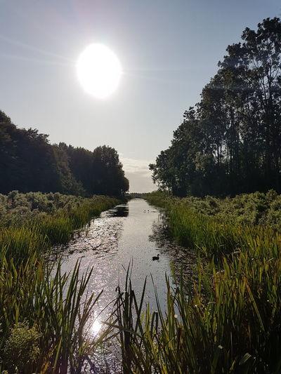 Water Tree Sun