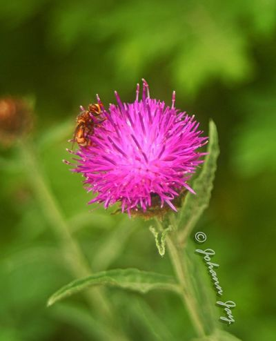 La Petite Ceinture Nature_collection Fleurs Paris, France  Insectes Macro_collection Microcosmos