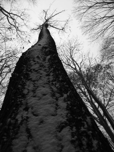 Bare Tree Beauty In Nature Black And White Branch Bükk Bükk National Park Hungary Low Angle View Nature No People Sky Tree Tree Trunk