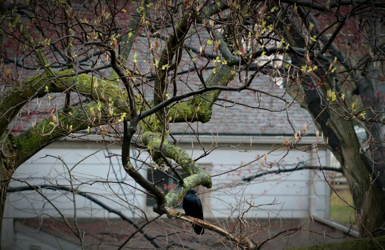 Crow Spring Spring Into Spring