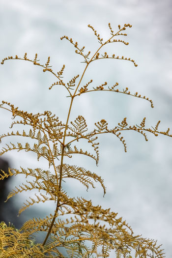 Low angle view of snow on plant against sky