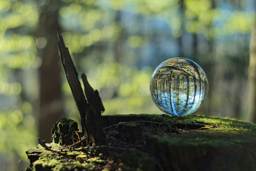 Magic ball in deep forest at morning. Feel free to follow me: www.facebook.com/nexpophoto Ball Bokeh Close-up Crystal Ball Day Follow4follow Followme Forest Green Magic Nature Nature No People Outdoors Sunlight Tree