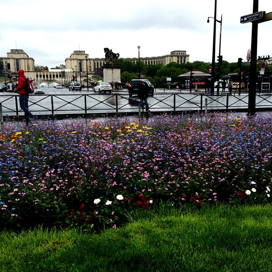 Hi friends Flower Flowers Flowerpower Paris City Trip Rain Spring Toureiffel