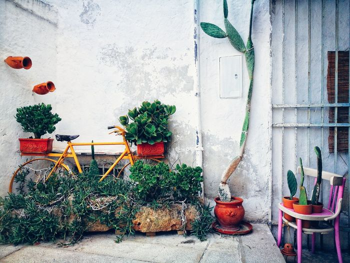 Potted plants hanging against wall