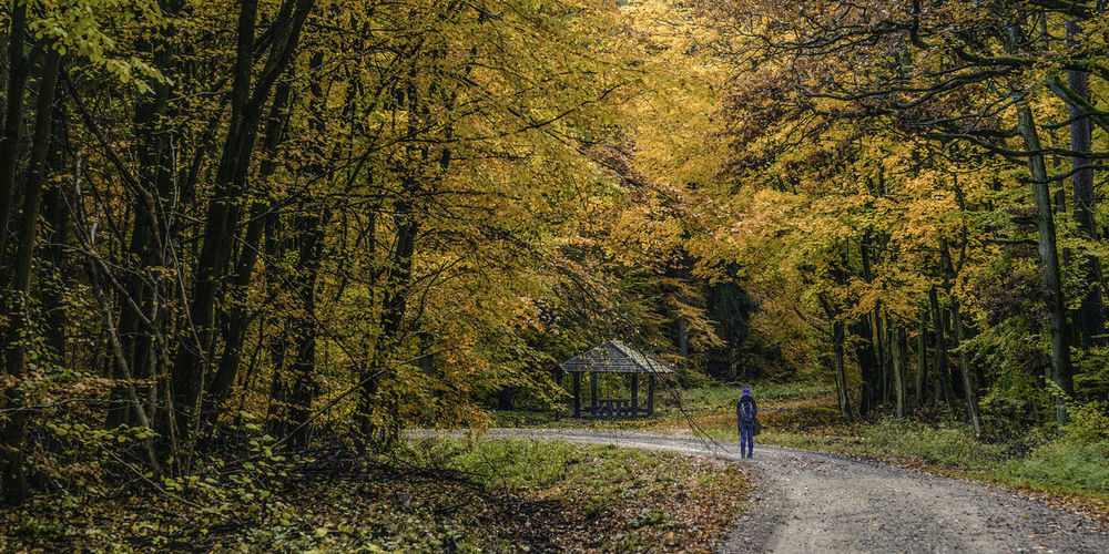 Strolling down the forest road. Autumn Autumn Autumn Collection Autumn Colors Beauty In Nature Day Fall Nature One Person Outdoor Outdoors Tree Trees Walk Walking Woods
