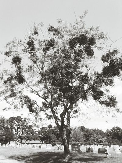 Tree_collection  Capa Filter The Wisdom Is In The Trees Not The Glass Windows Mistletoe