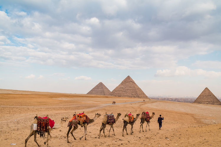 Sky Nature Outdoors Egypt Pyramids Giza Giza Pyramids Of Egypt Travel Destinations Trip Ancient Cairo Egypt Desert Tourism Egyptian Archaeology Architecture Historical Hot Heat - Temperature Summer Tomb Bedouin Its About The Journey Camel Riding It's About The Journey