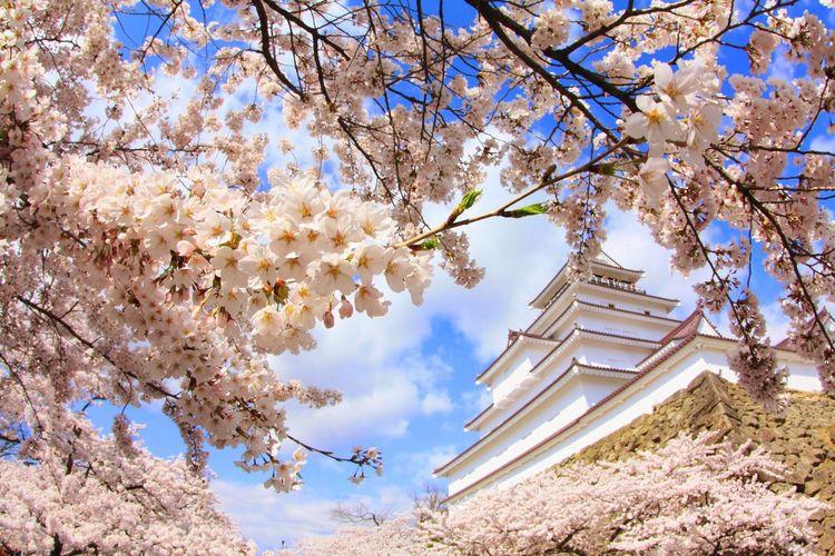 福島 鶴ヶ城 Tree