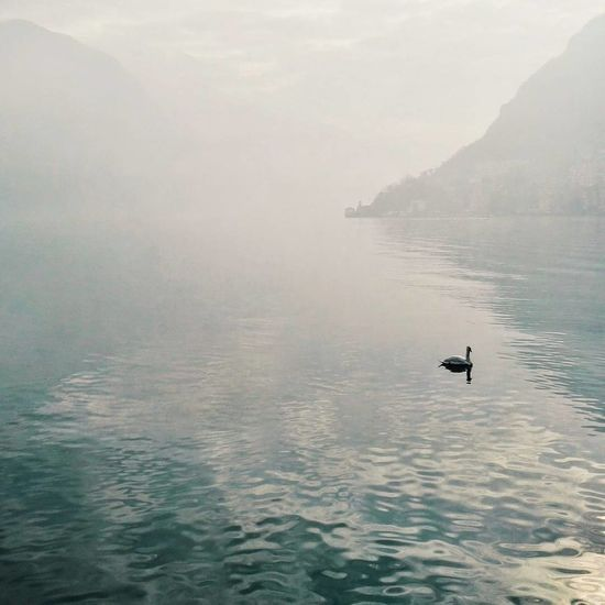 Water Nature Lake Tranquility Day Beauty In Nature Cloudy Weather⛅☁ Lugano Lake Lugano, Switzerland. Art Is Everywhere