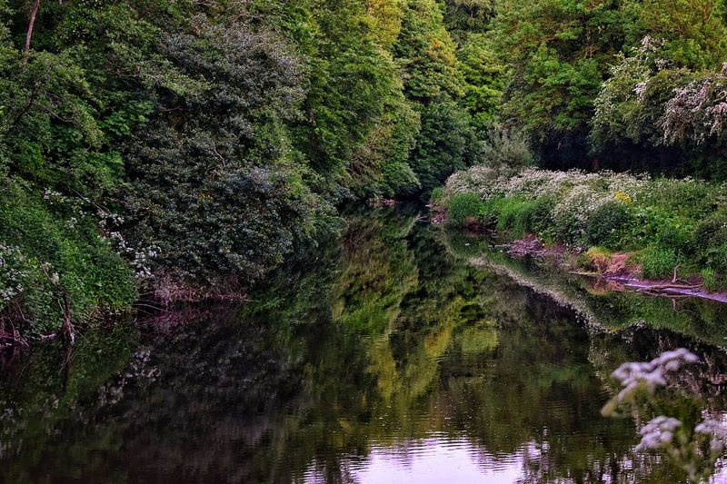 Reflection of trees in river