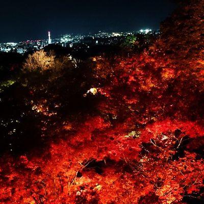 Kiyomizu Temple (清水寺) Scene Lightup Kyoto Temple Fall Japan