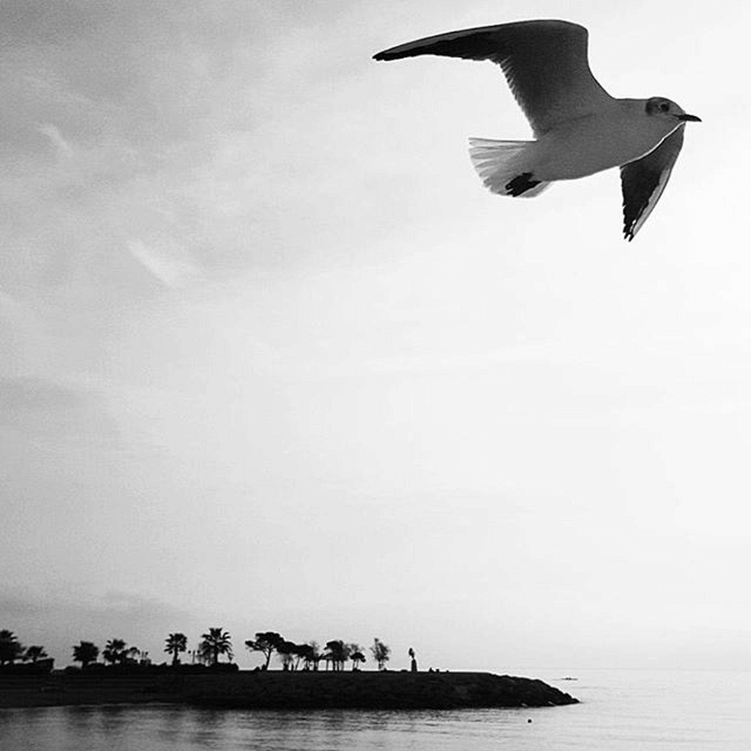 flying, water, sea, mid-air, sky, bird, transportation, clear sky, mode of transport, spread wings, low angle view, waterfront, nature, copy space, horizon over water, travel, day, animal themes, seagull, outdoors