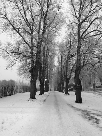 Huaweiphotography Huawei Photography Huawei Honor Huawei Honor 9 HuaweiHonor Blackandwhite Black & White Black And White Fog Foggy Tree Winter Snow Cold Temperature Bare Tree Nature Road The Way Forward Outdoors Beauty In Nature Tranquility Scenics No People Landscape Branch Day Sky Shades Of Winter Shades Of Winter
