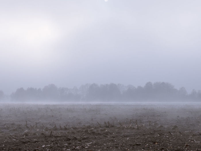 Agriculture Beauty In Nature Cold Day Fog Foggy Day Grey Haze Landscape Mist Nature No People Outdoors Scenics Tranquil Scene Tranquility Tree Treeline Weather Wet