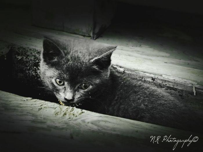 Cats Kitten Urban Rochester, NY Taking Photos NiRobinson