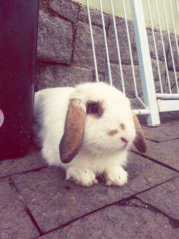 Baby bunny being cute ♥ Bunny  Rabbit Cute Puppy