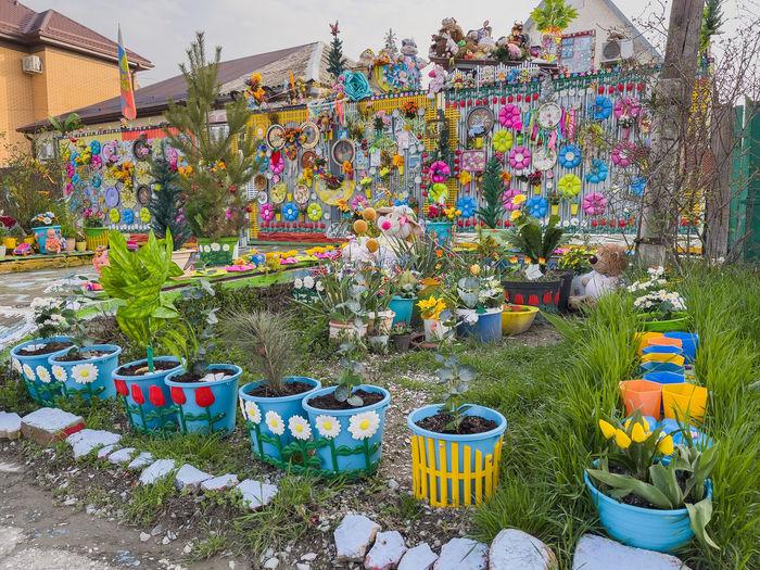 Multi colored flower pot plants for sale