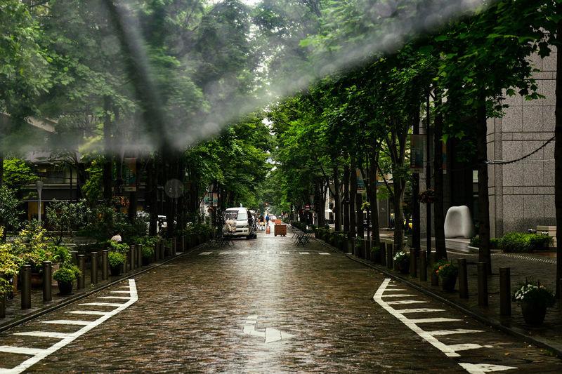 Wet street amidst trees during rainy season