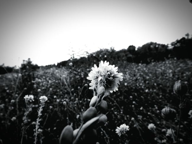 Field Of Flowers Macro Photography Macro_collection EyeEm Black&white! EyeEm Best Shots - Macro / Up Close Macroblackandwhite Canon_official The Great Outdoors - 2015 EyeEm Awards EyeEm Nature Lover . Shades Of Grey Nature Diversities