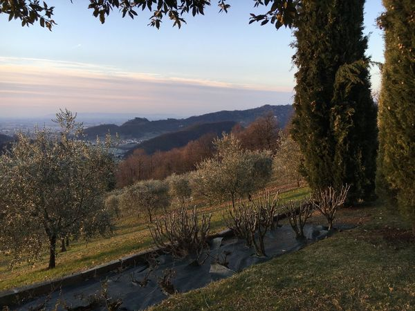 Ravano panorama, and the power of man to take care of nature. 19 january 2017 Medievalcity Castle Visitveneto Cypress Trees  Hills TakeCare  Nature Marostica Tree Nature Landscape Tranquility No People Beauty In Nature Tranquil Scene