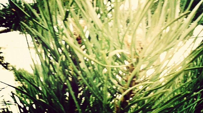 Photography Nature Art
