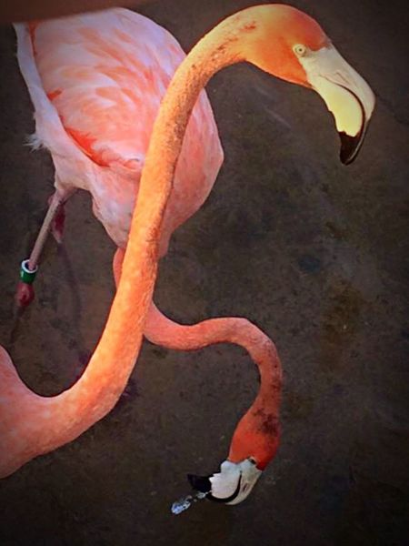 Check This Out Flamingos Standing On One Leg EyeEm Nature Lover Flamingos Up Close San Diego County